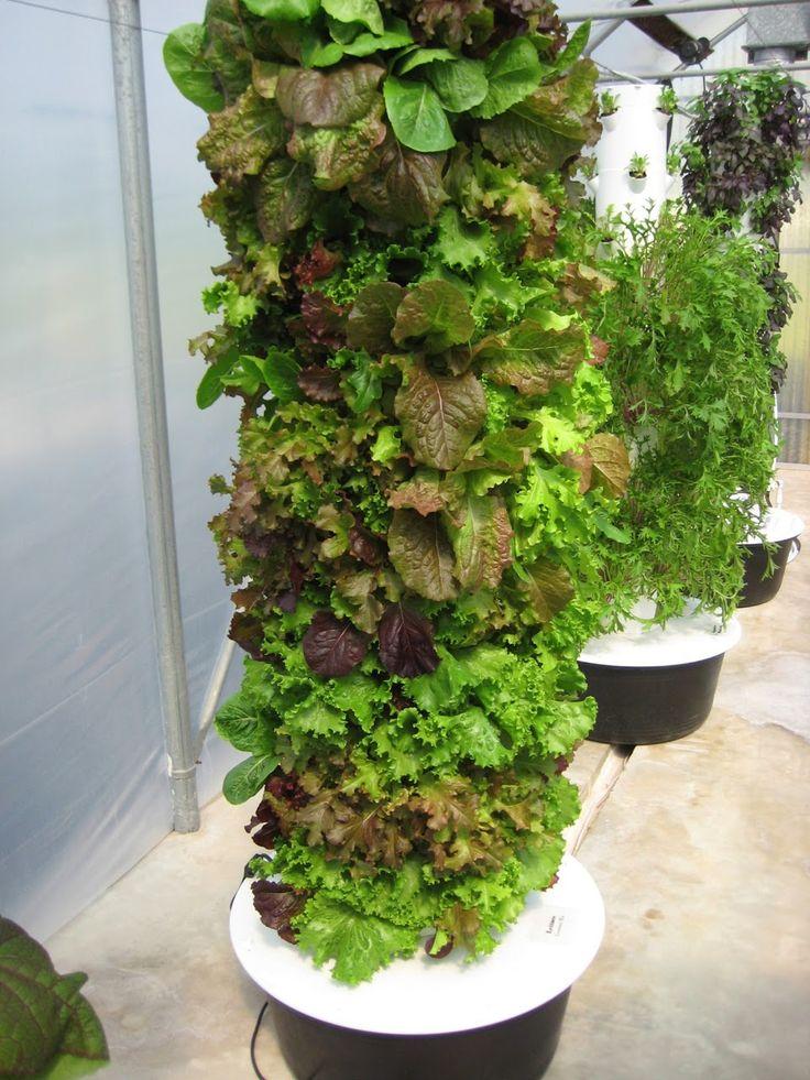 4 Week Gourmet Lettuce Grown in the Tower Garden! http