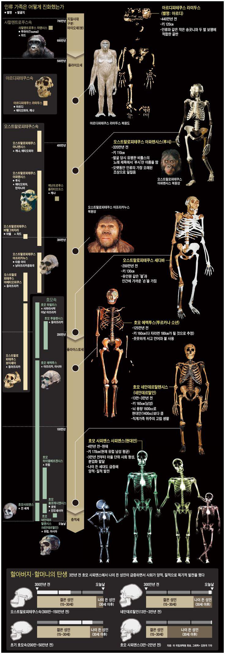 네안데르탈人의 이기적 사랑이 멸종 불렀다 - 조선닷컴 인포그래픽스