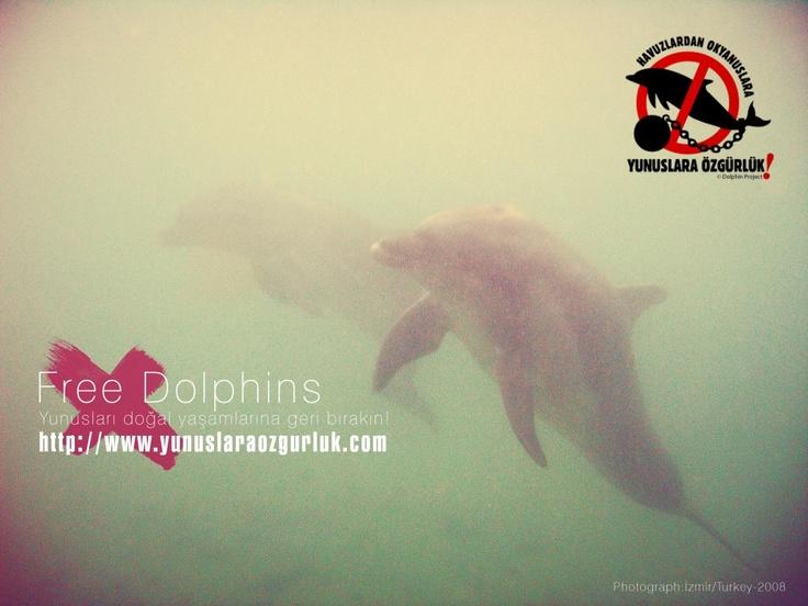 Let them free!    http://yunuslaraozgurluk.com/sites/default/files/free%20dolphins.jpg