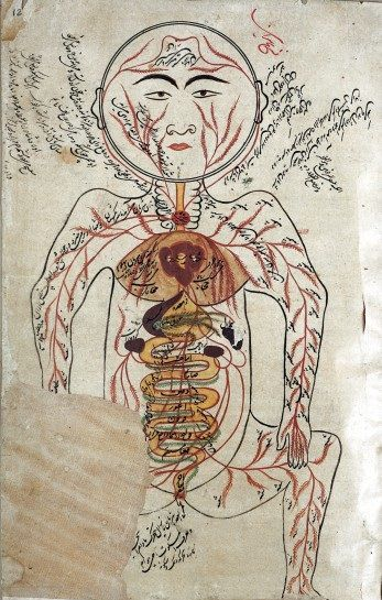 İbn-i Sina' nın çizimiyle insan anatomisi.