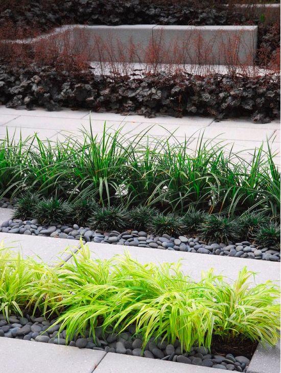 Nice combination of grasses liriope hakonechloa mondo for Contemporary garden grasses