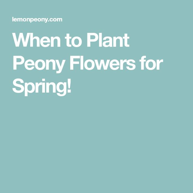 When to Plant Peony Flowers for Spring!