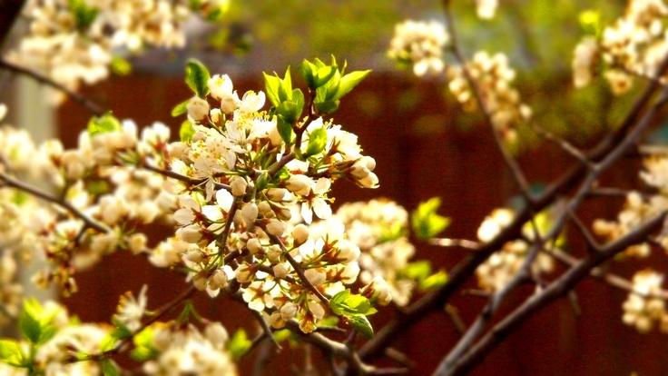 New.  Flowers.  Season of love.  Spring.