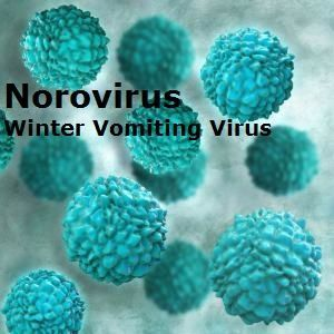 Norovirus Winter Vomiting Virus Symptoms and Treatment:Follow these 7 tips to defeat the norovirus winter vomiting virus.  This health and safety guide also explains how to reduce the risk of spreading the stomach bug to others.
