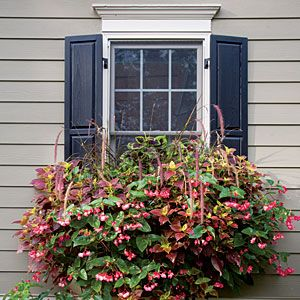 82 Creative Container Gardens | Coleus, Begonias & Purple Fountain Grass | SouthernLiving.com: Flowers Gardens, Gardens Ideas, Container Gardens, Southern Living, Spectacular Window, Flowers Boxes, Fountain Grass, Purple Fountain, Window Boxes