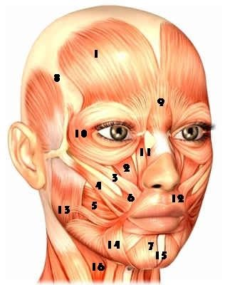 Face lifting exercises for the forehead, eyes, nose, cheeks, mouth, jowls, chin and neck. Free face exercise guide for every part of your face with videos! WEIRD