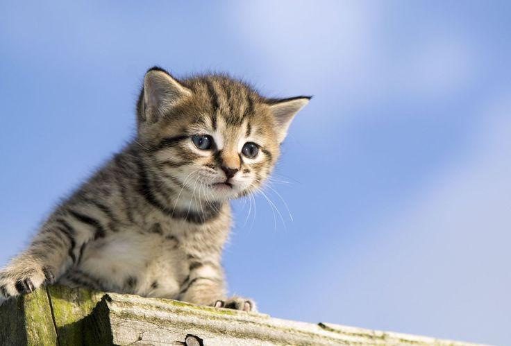 Um professor americano teve uma ousada ideia para preservar a vida selvagem - o que pode não ser muito bem aceito pelos amantes de gatos.