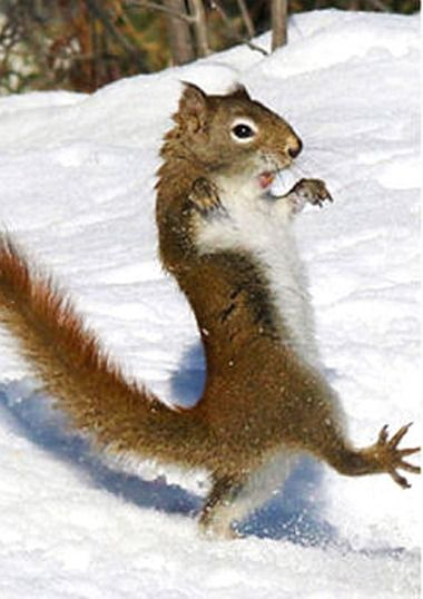 "** SQUIRREL: "" Der be such repulsive faces in de world. Me justs seen one. Sho' nuff - it  wuz a hunter."""