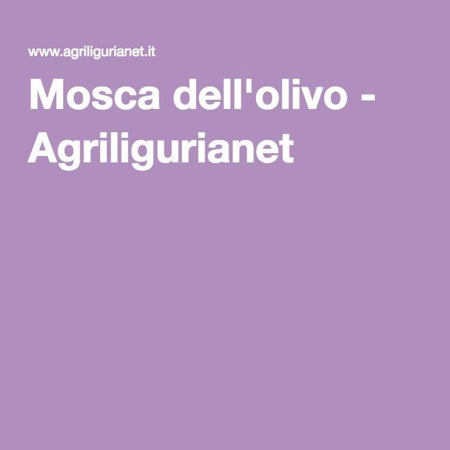 Mosca dell'olivo - Agriligurianet