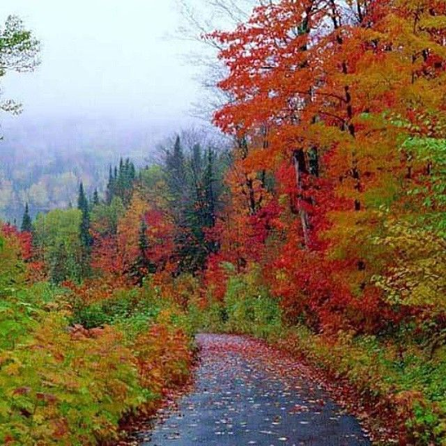 This way → Trabzon ⛵ Eastern Blacksea Region of Turkey ⚓ Östliche Schwarzmeerregion der Türkei #karadeniz #doğukaradeniz #trabzon #طرابزون #ტრაპიზონი #travel #city #nature #culture #ecotourism #mythological #colchis #thegoldenfleece #thecolchiandragon #amazonwarriors #tzaniti
