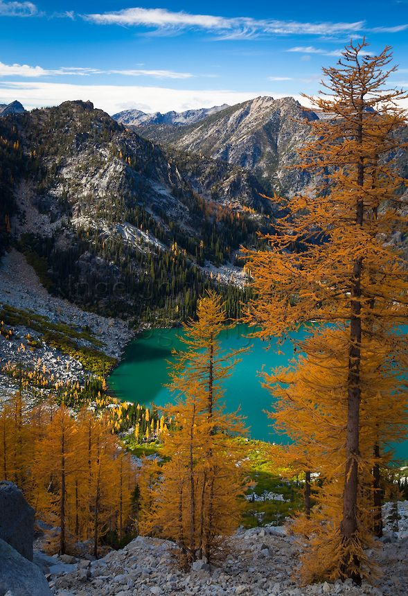 Larch trees at Colchuck Lake in the Enchantment Lakes wilderness area of Washington state