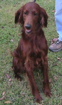 RIGBY was picked up as a stray in rural TN and, due to his poor condition and the reputation of the local shelter, we were asked to take him into our program. This boy had been seriously neglected for a while, and we got him into the vet within hours of taking custody of him.  Notwithstanding the obvious violations of the laws of Tennessee regarding dogs running at large (it didn't take long to find several folks who had seen him wandering on a daily basis), no tags, chasing deer, and so…