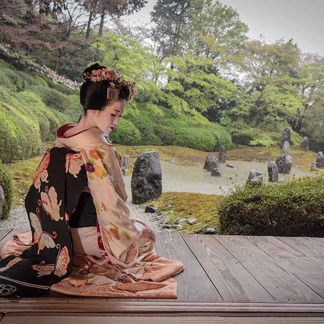The maiko Tomitsuyu with a butterfly obi. (Taken by Patricia Pomerleau and click here for the individual source)