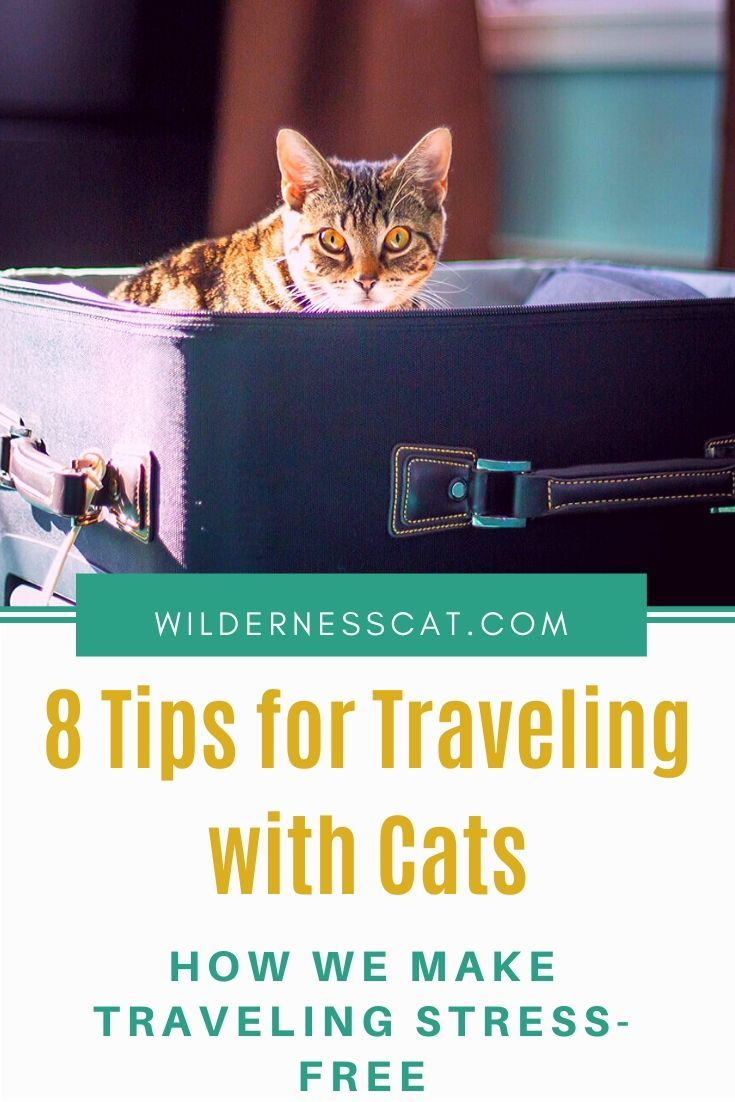8 Ways We Take The Stress Out Of Traveling With Cats In 2020 Cat Travel Camping With Cats Adventure Cat