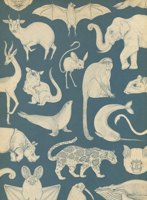 :: katie-scott: Mammals wallpaper in Animalium ::