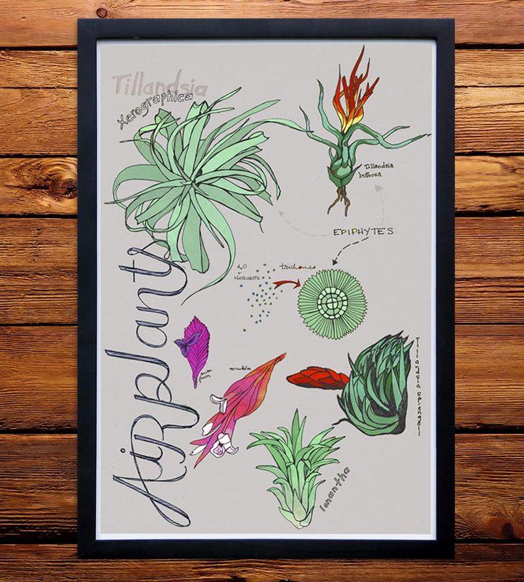 best 25 plant identification ideas on pinterest identify plant poison oak and plants near me. Black Bedroom Furniture Sets. Home Design Ideas