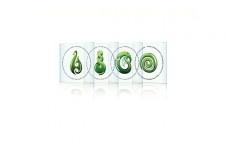 greenstone icon coasters $35.90