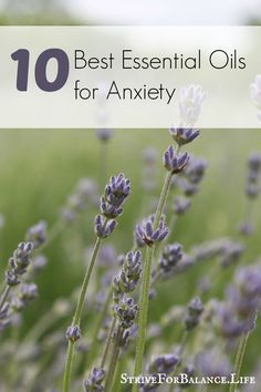 10 Best Essential Oils for Anxiety. Numbers 1,2, and 10 work best for me!
