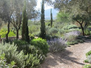 Pathways lined with cypress trees, olives and typically Mediterranean herbs and shrubs. Greece.