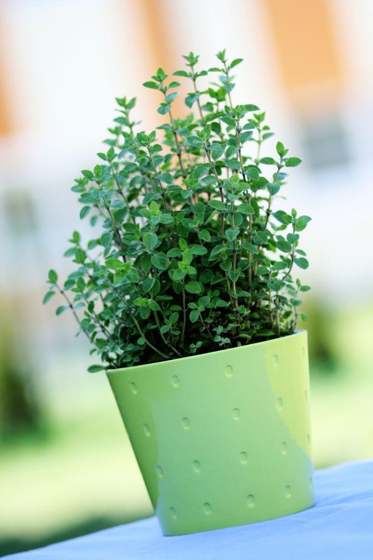 Vypestujte si bylinkovú záhradu na terase alebo balkóne