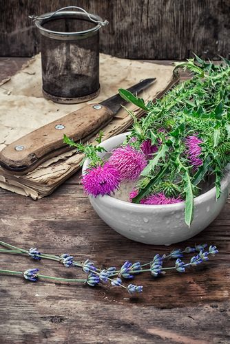 Medicinal Milk Thistle Uses for Liver Health, Anti-Oxidant Protection, Anti-Aging, Skin & Acne. What are the positive benefits of this herbal extract?