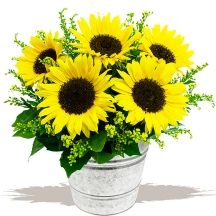 Sunflower Bucket Delivery Available UK Wide Monday - Saturday FREE Gift Card Your Message Included  A stylish arranged and tied sunflower bunch, infused with golden Solidago flower. This happy bouquet is delivered with a stylish galvanised mini bucket included. Personal message with gift card, cut flower food and care instructions included. Galvanised mini bucket included.