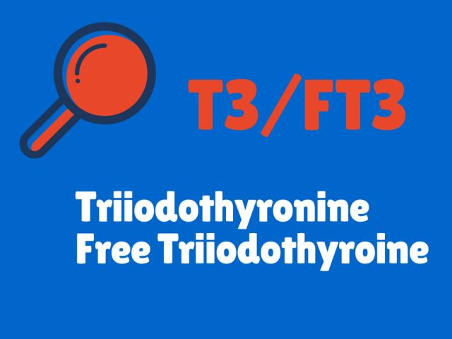 What Do Your Thyroid Blood Test Results Mean?: T3/FT3 - Triiodothyronie / Free Triiodothyronine - Thyroid Tests