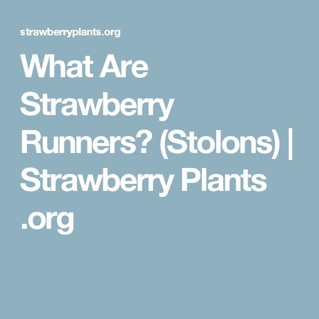 What Are Strawberry Runners? (Stolons) | Strawberry Plants .org