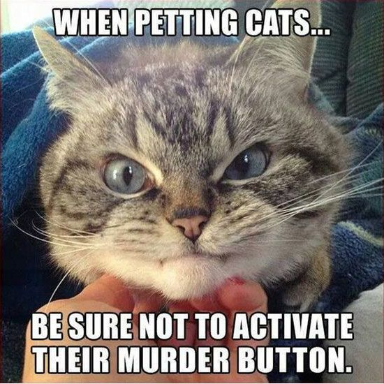 When Petting Cats - Funny Animals with Captions LOL