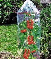 Tomaten kweekzak