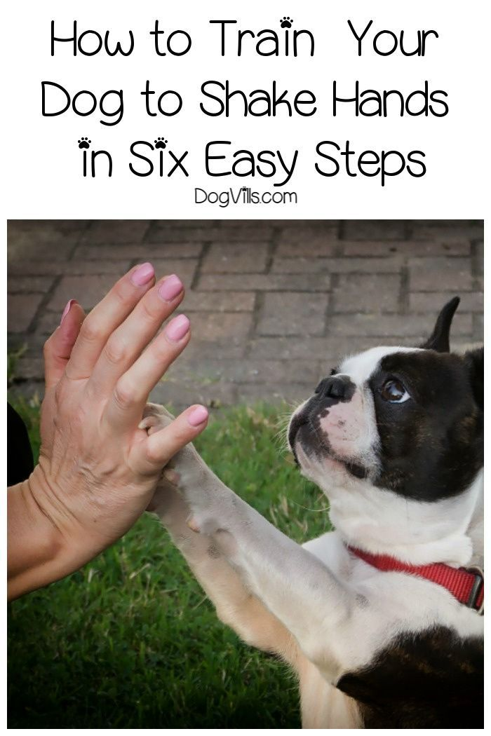 How To Train A Dog To Shake Hands In 6 Easy Steps Dog Training