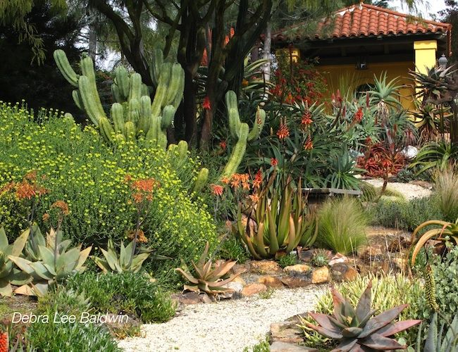 patrick andersons garden where it all started succulents and succulent garden design debra