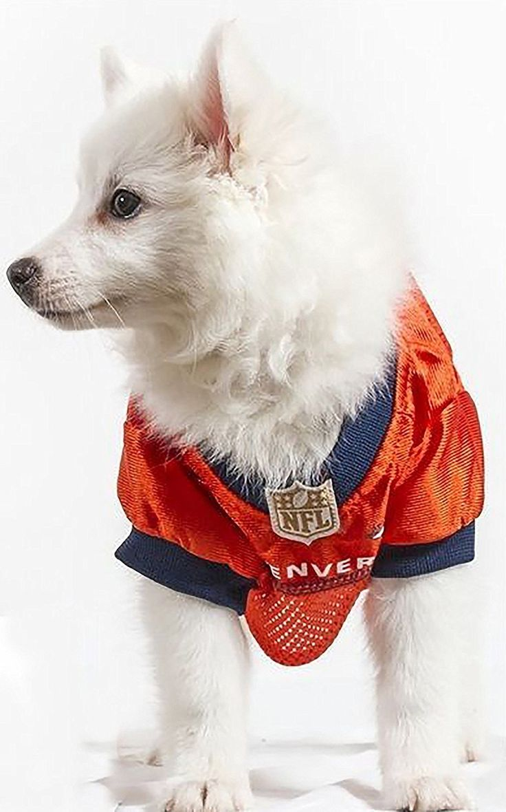 Official NFL Denver Broncos Football Jersey for your Dog.  They come in all sizes!  So cute!  www.dogfootballjersey.com