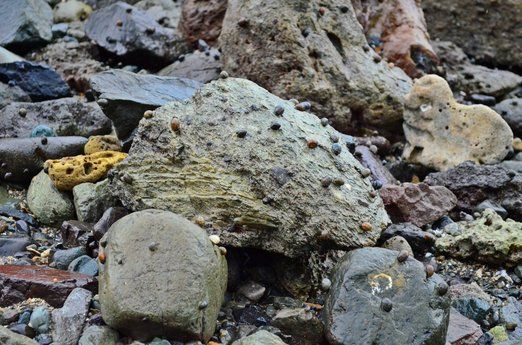 Interesting rocks: Various rocks with different shapes, patterns and colors constitute Kunti Island, often topped with c...