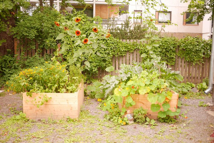 The raised garden beds in August. tuulinenpaiva.fi