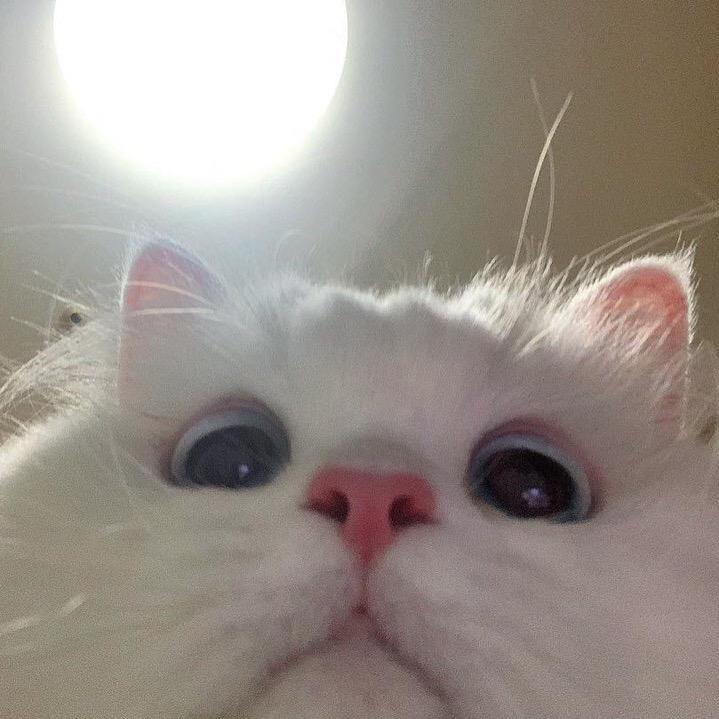 Flexingg Podpischiki 50 0k Podpiski 0 Lajki 932 0k Flexingg Sozdaet Klassnye Korotkie Videoroliki In 2020 Cute Baby Cats Cute Cat Wallpaper Pretty Cats