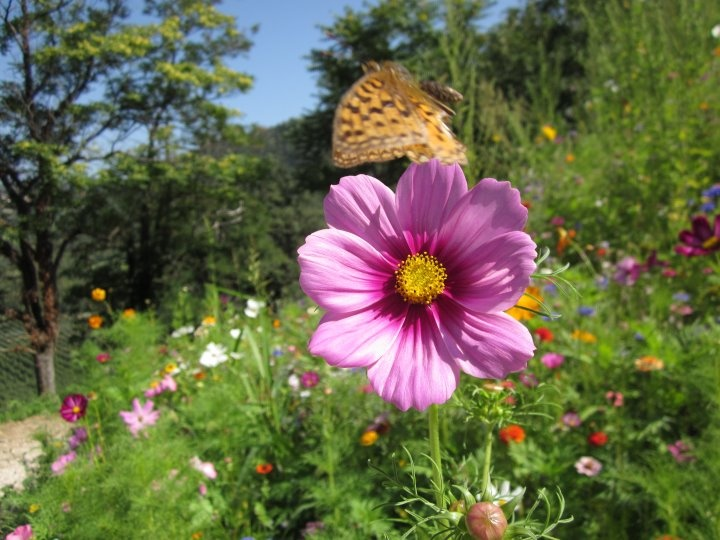 Flowers - Trentino  © Ivana Scarpa - our Facebook fan