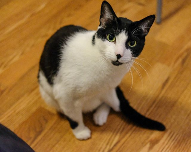 Dexter's so photogenic it's unfair #cute #cat #dexter