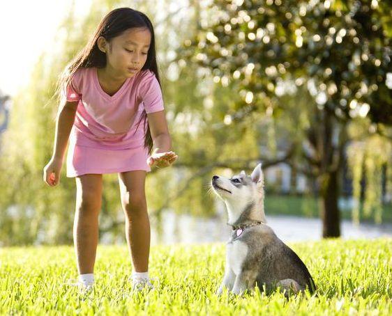 Trainen met je hond - 9 tips voor snel resultaat