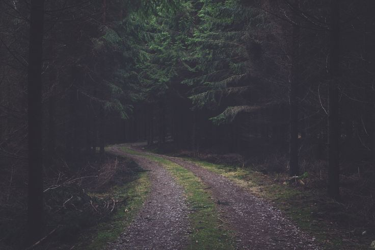"""Blog Post 44 - """"Life is like a Fairy Tale Forest"""" - I have been told that life is not a fairytale..."""