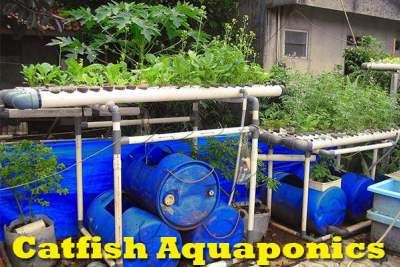 Catfish Aquaponics: The Best Fish Ever For Aquaponics diyaquaponicsplan...