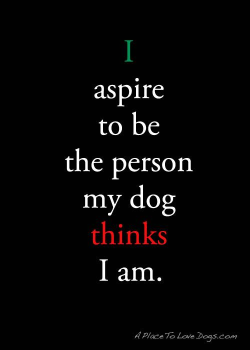 i aspire to be… • from  APlaceToLoveDogs.com • dog dogs puppy puppies cute doggy doggies adorable funny fun silly photography