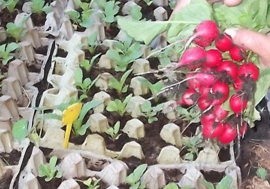 Így termessz magadnak retket egy végtelenül egyszerű módszerrel - Egy az Egyben