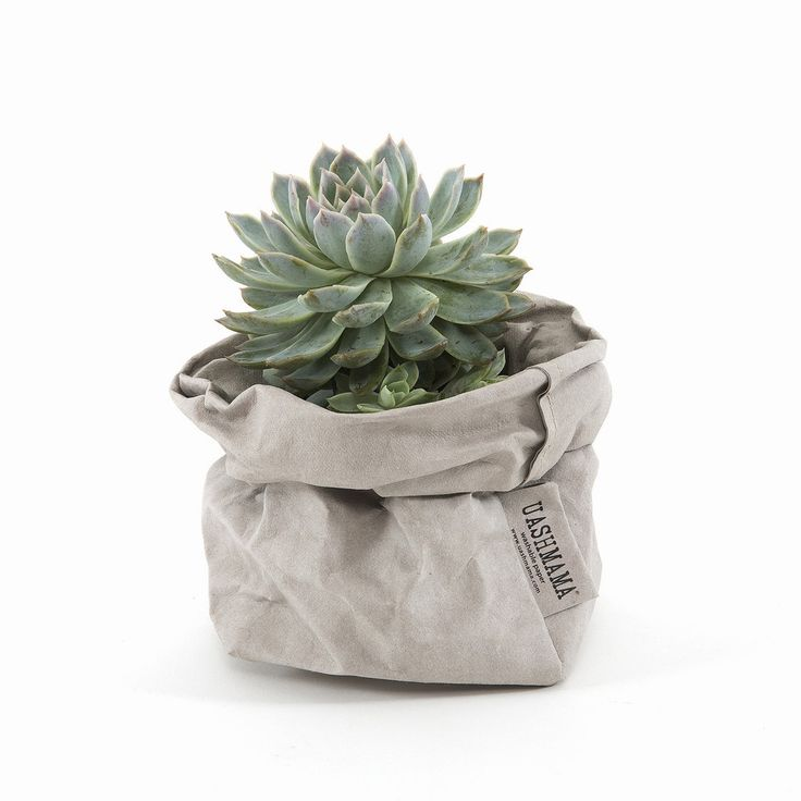UASHMAMA bag - One of my absolute favourites. Will be buying one for a baby fern and put it on my bathroom vanity.