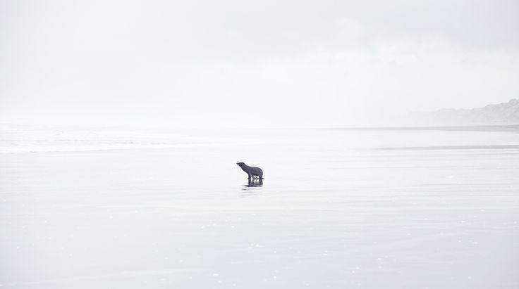 Our Land, West Coast, NZ Art, Landscape, Ocean, Seal, Beach.