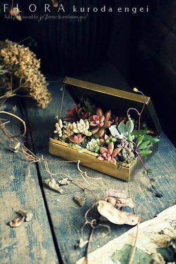 多肉植物|フローラのガーデニング・園芸作業日記