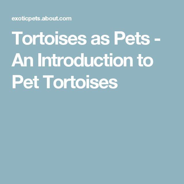 Tortoises as Pets - An Introduction to Pet Tortoises