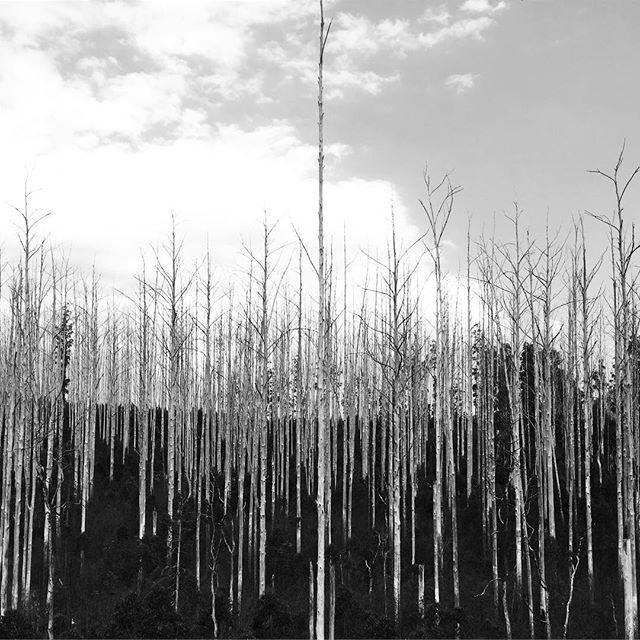 Tree graveyard ☠️