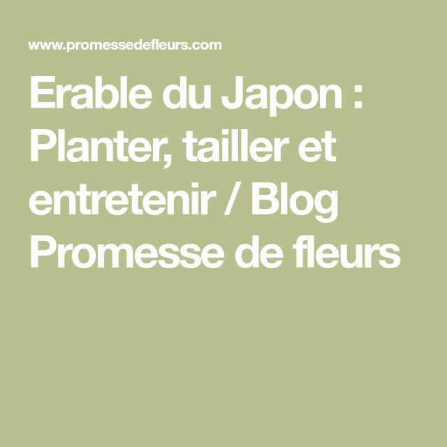 Erable du Japon : Planter, tailler et entretenir / Blog Promesse de fleurs