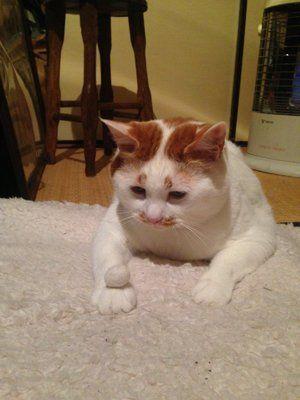 「自分の毛で作ったオモチャて遊ぶ猫」のYahoo!検索(リアルタイム) - Twitter(ツイッター)、Facebookをリアルタイム検索
